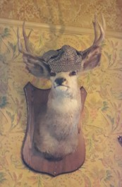 Deer in deerstalker